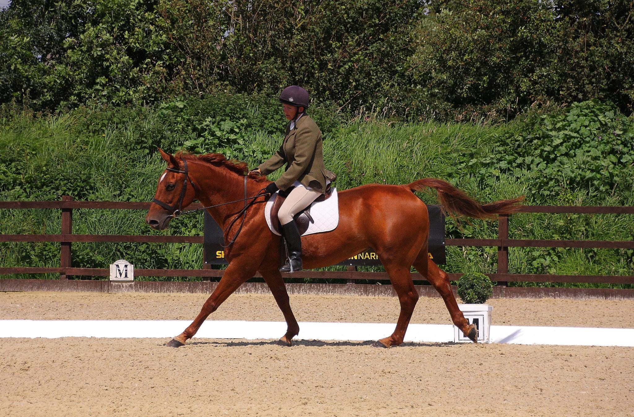 Dressage Parley Equestrian Centre